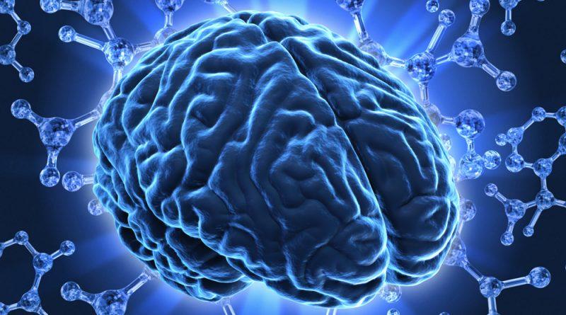 Интересные факты о мозге 1