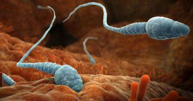 Аутоиммуннитет сперматозоидов