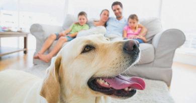 Домашние животные и здоровье семьи